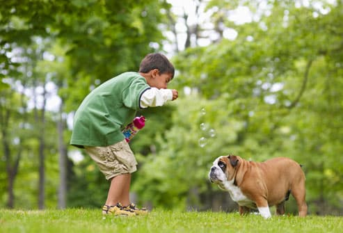 Boy blowing bubbles for bulldog