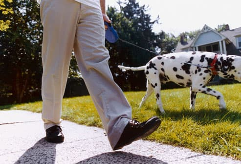 Man Walking Dalmatian Dog