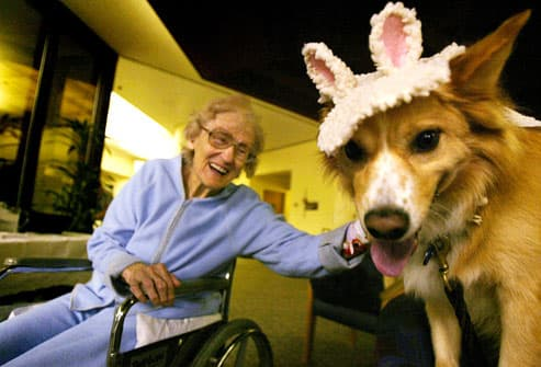 Hospital Therapy Dogs Dress Up for Halloween