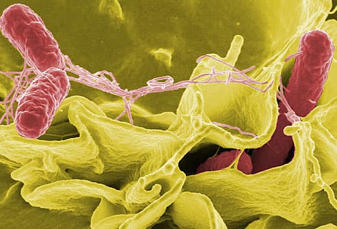 An Unforgettable Salmonella Illness | Food Poison Journal