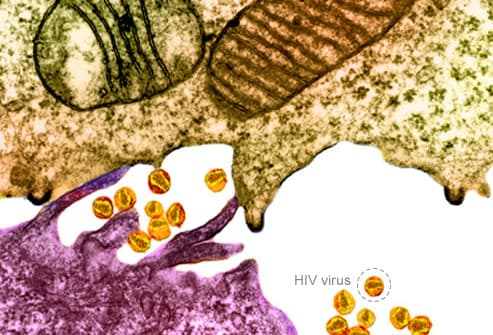 HIV Virus Close Up