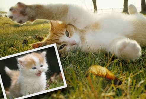 Cat stretching in grass, inset kitten photo