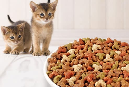 Two kittens looking at bowl of kitten food
