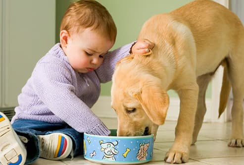 Puppies Care on Puppy Care  From Adoption To Puppy Proofing And General Puppy Care