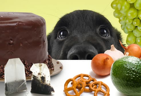 Puppy Looking at an Array of Food