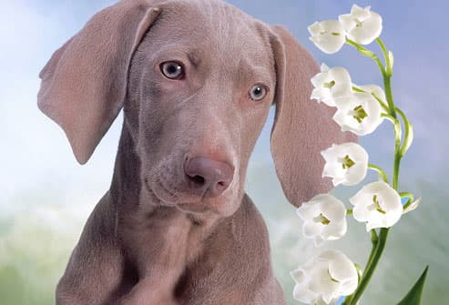 Puppy Looking at White Flowers