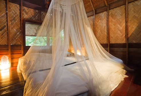Mosquito Nets Over Resort Bed