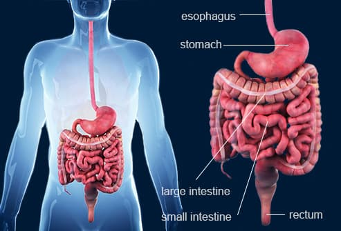 crohn's disease slideshow: symptoms, causes, and treatments, Skeleton
