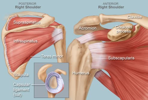 Illustration of shoulder