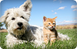 Cat and dog on gras