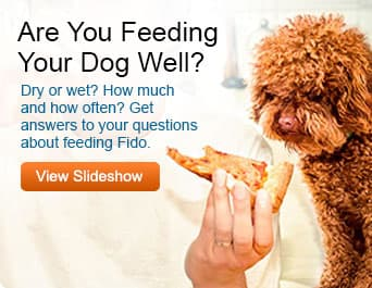 pedigree feeding promo