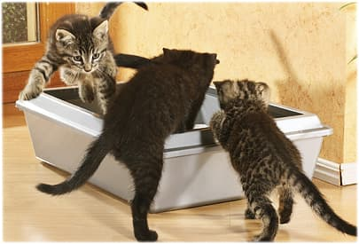 Three kittens using litter box