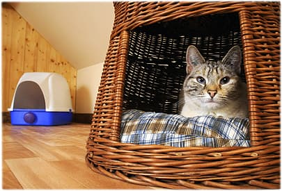 Cat sitting in a basket