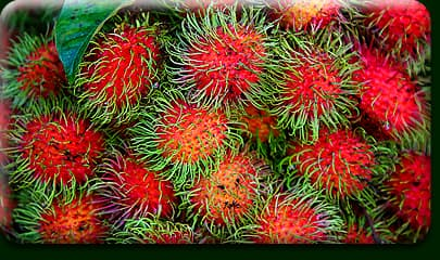 Red Fruit With Spikes http://fit.webmd.com/kids/food/rmq/rm-quiz-weird-wacky-fruit-facts