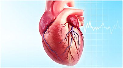 heart quiz: what makes you tick? trivia, Human Body