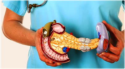 how well do you know your pancreas?, Cephalic Vein