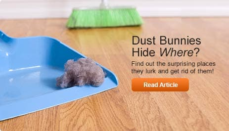 dust bunnies hide where