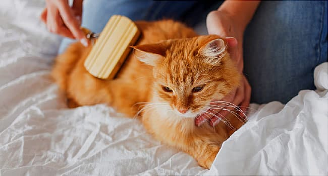 How to Keep Your Indoor Cat Healthy and Happy