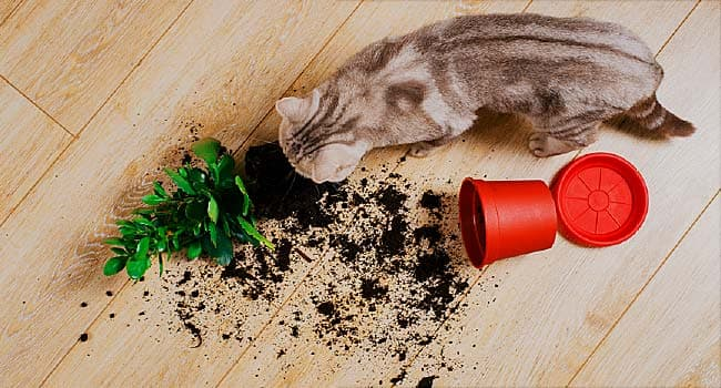 Top Cat Poisons: Plants, Medications, Insecticides, and More