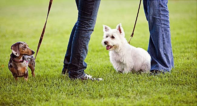 Flea and Tick Map: Check Activity in Your State