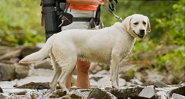 Running, Hiking and Your Dog: How to Keep Your Active Pet Safe