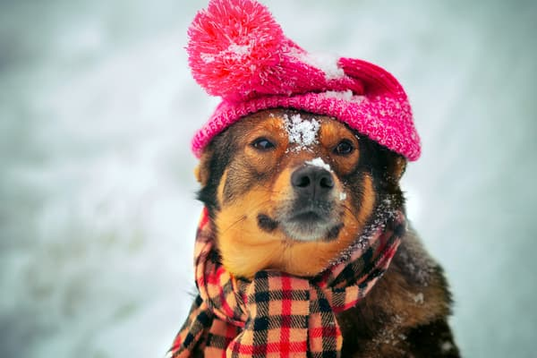 photo of dog in winter