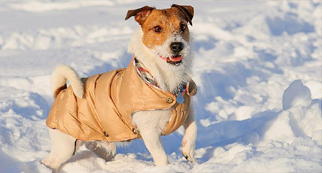 Keep Your Dog Warm A Cold Weather Guide