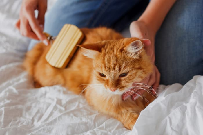 photo of cat being brushed
