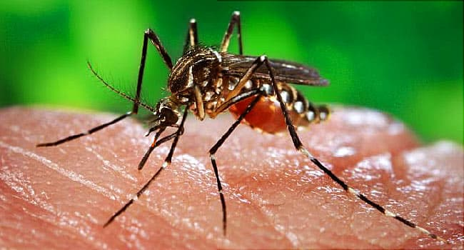 Areas Warned About Mosquito-Borne Illness EEE
