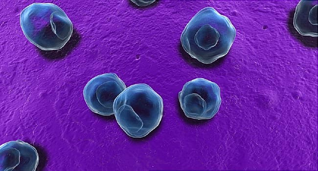 STDs Hit Record High in California