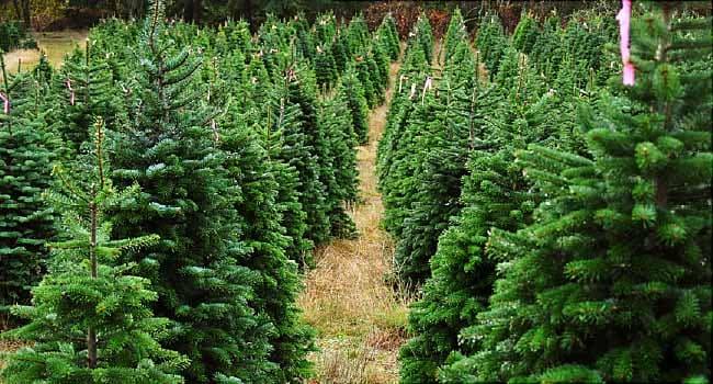 Top 5 Best Pine Scents for Artificial Christmas Trees
