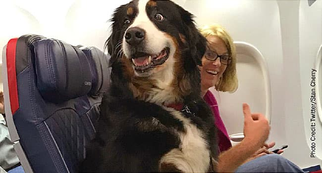 emotional support animal on plane