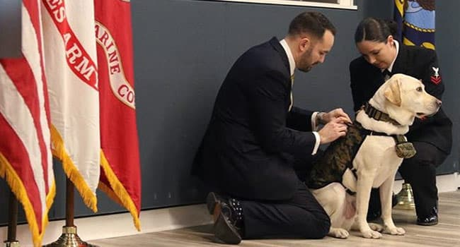 George HW Bush's Former Service Dog 'Sully' Takes Oath As Hospital Corpsman