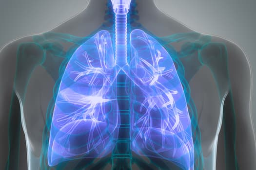 photo of medical illustration lungs blue black whi