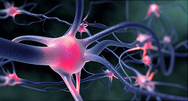 active nerve cells firing other