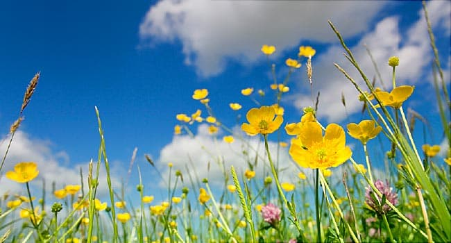 flowers on sunny day