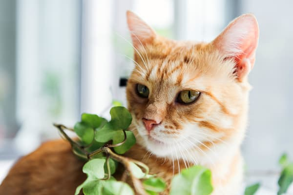 photo of cat next to plant