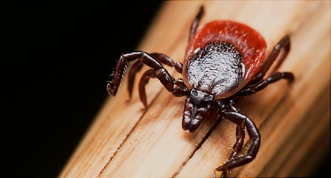 how to get a tick out from under your skin