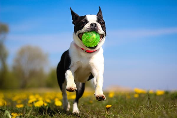 photo of dog with ball