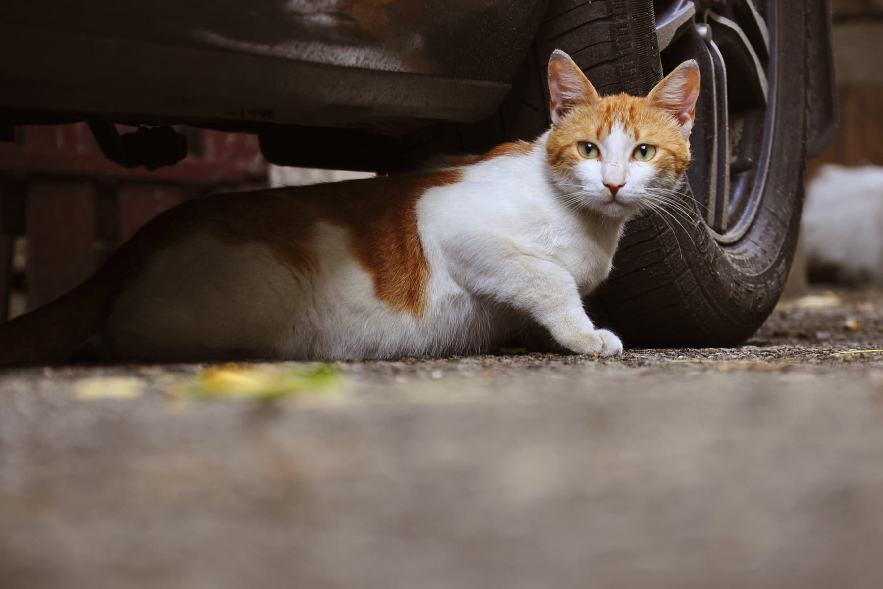 Stray And Feral Cats How To Help Them
