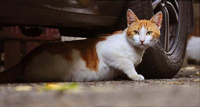 Stray and Feral Cats: How to Help Them