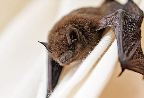 Almost 200 People at Zoo May Have Been Exposed to Rabid Bat