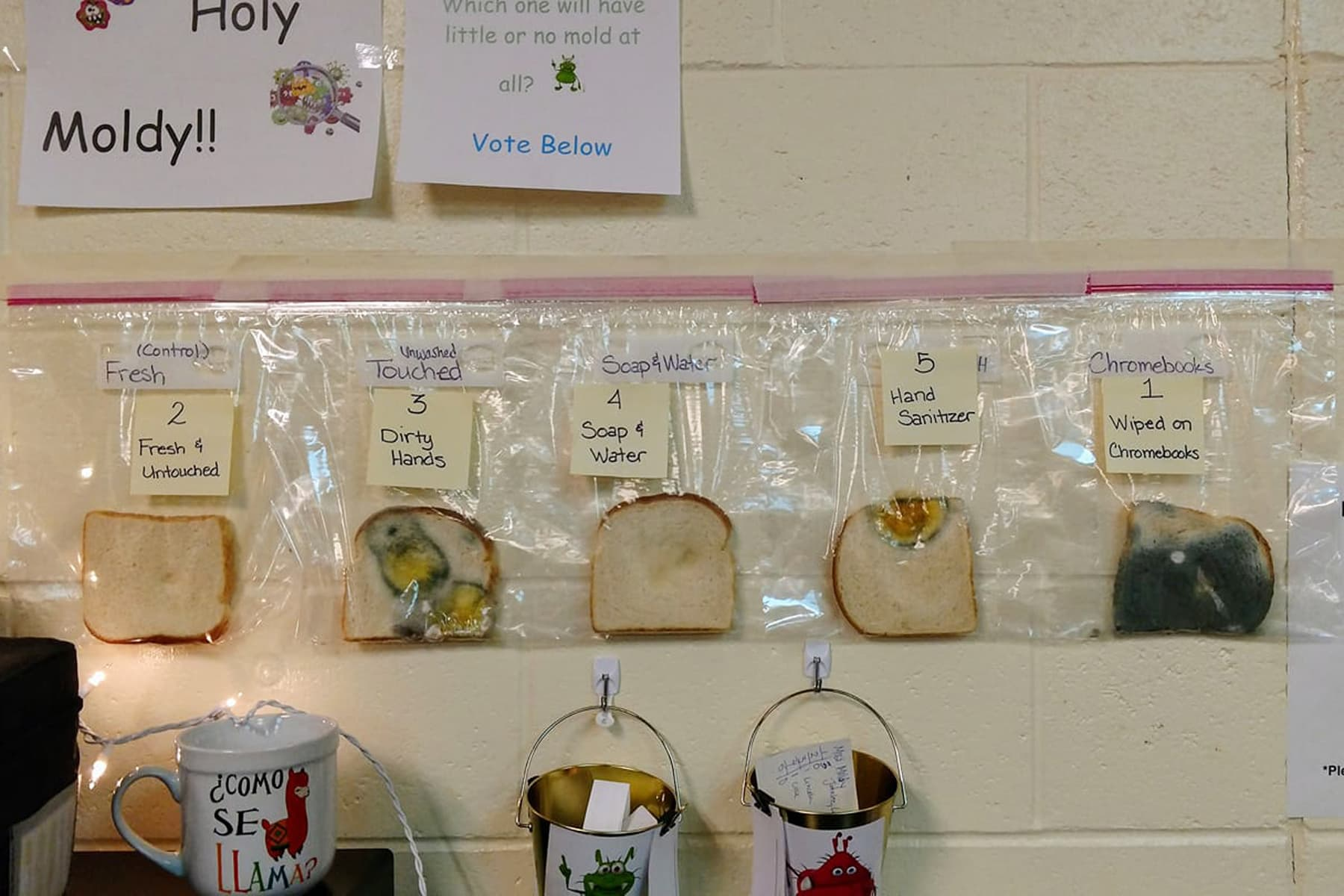 Teachers Use Bread to Show Why Handwashing Matters