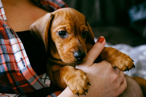 photo of puppy in woman's arms
