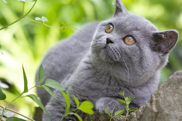 photo of short haired cat relaxing outside
