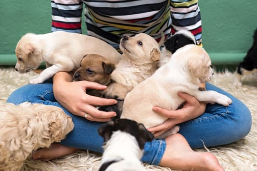 photo of woman playing with puppies