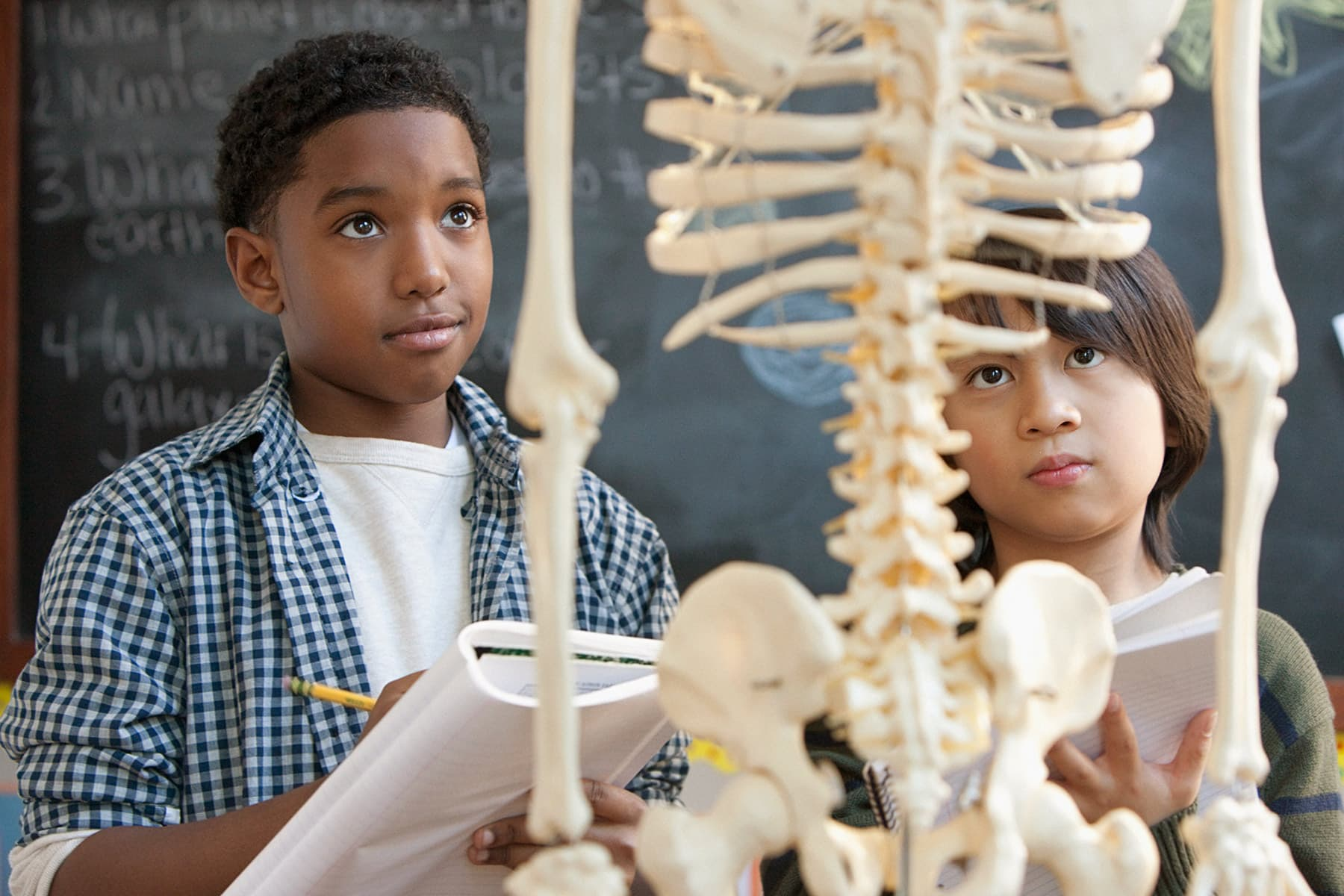 Bones Quiz Do You Know The Myths And Facts About Your Bones