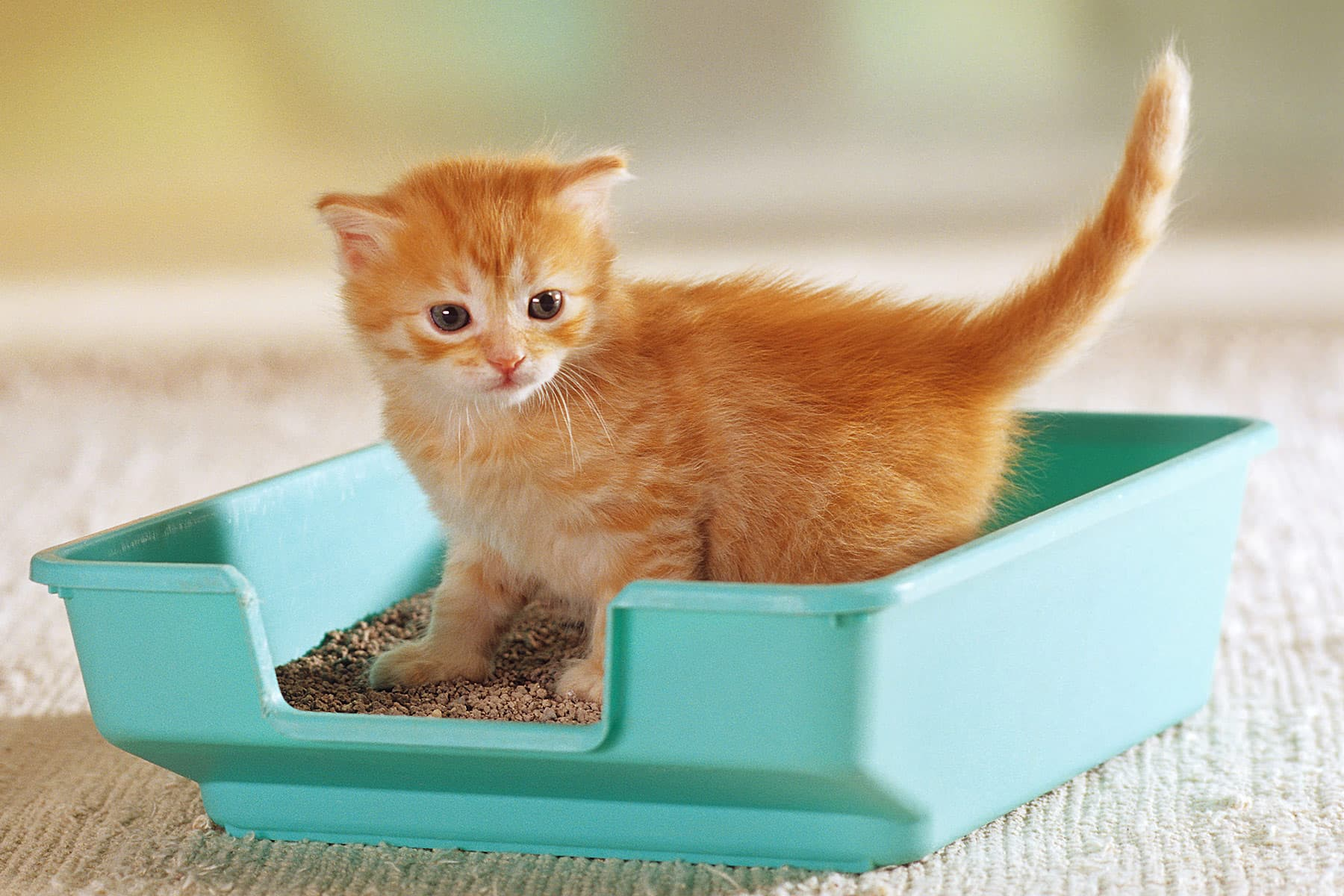 Litter Box Essentials Quiz