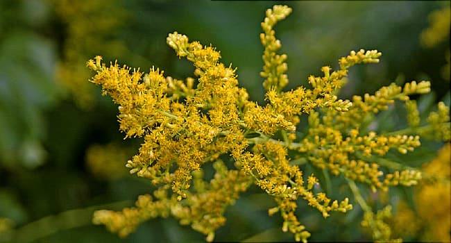 Climate Change Could Move Ragweed Season North