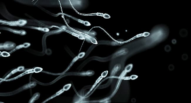 Effects of pot on male sperm share your